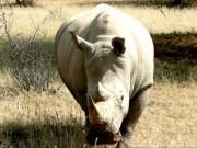 Rhino, Nashorn, Ausflug Waisenhaus mit Freiwilligen u. Kindern