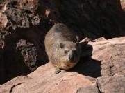 Tiere am Waterberg Namibia, Praktikanten auf Tour, Afrika